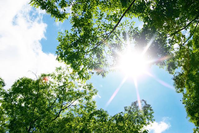 sol en la naturaleza
